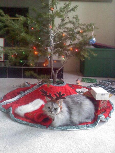 09クリスマスいろいろ