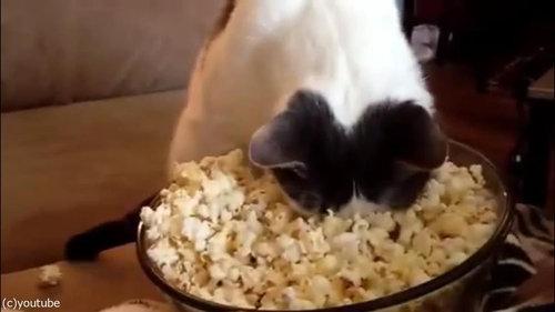 作りたてのポップコーンと猫05