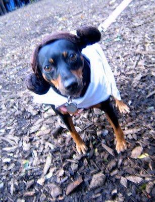 スターウォーズな犬06
