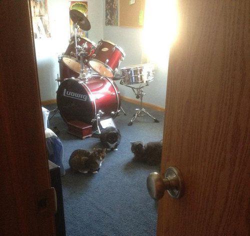 密談する猫たち17