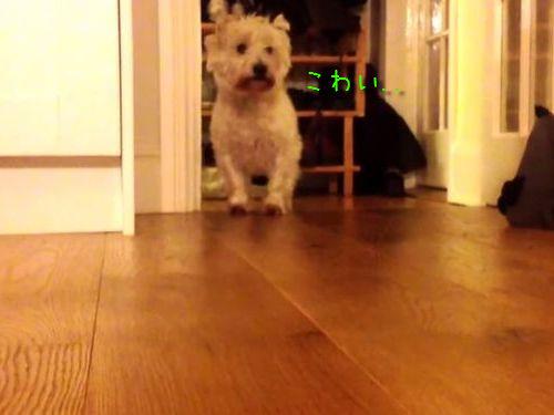キッチンが怖い犬00