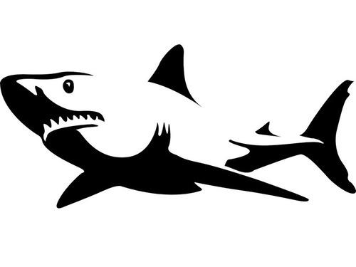 ホホジロサメを下から見ると…