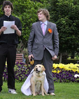 犬と結婚01