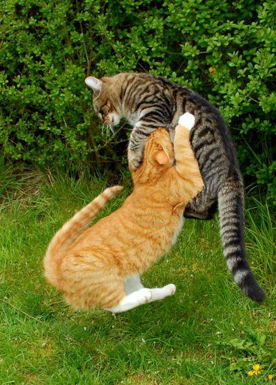 壮絶なる2匹の猫07