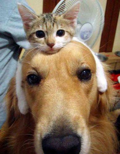 猫を頭乗せ21