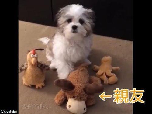 ぬいぐるみを並べ、犬に「あなたの親友は誰?」