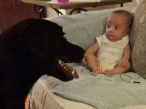 初めて妹と犬が対面した日02