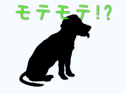 モテモテの犬00