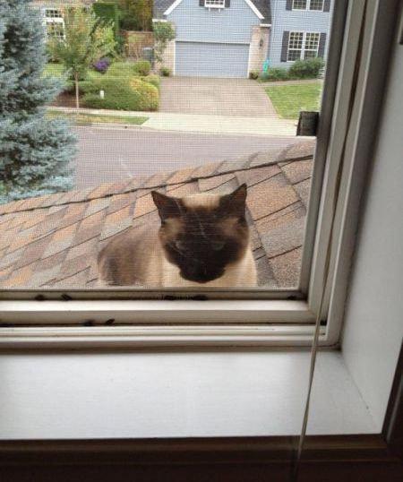 うちの猫じゃない18