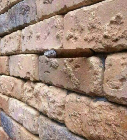 「壁に何が見える?」01
