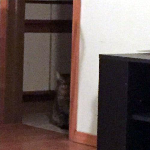 姉の猫に見られてる04