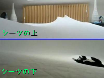 シーツの下で猫が泳いでる