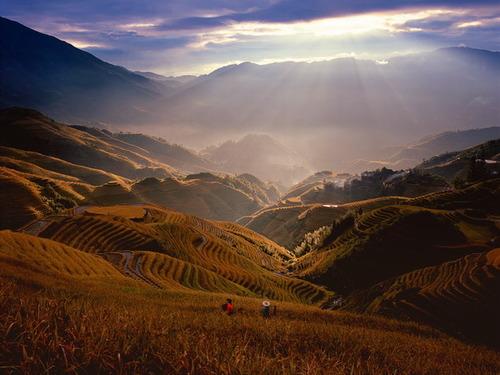 絵画みたいな中国の田んぼ06