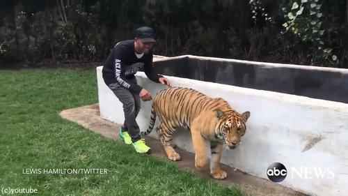 虎を背後から脅かすと01