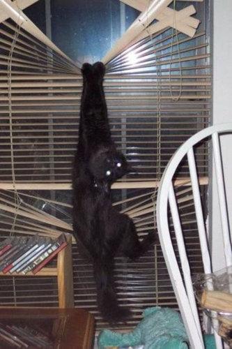 この家に猫がいる理由06