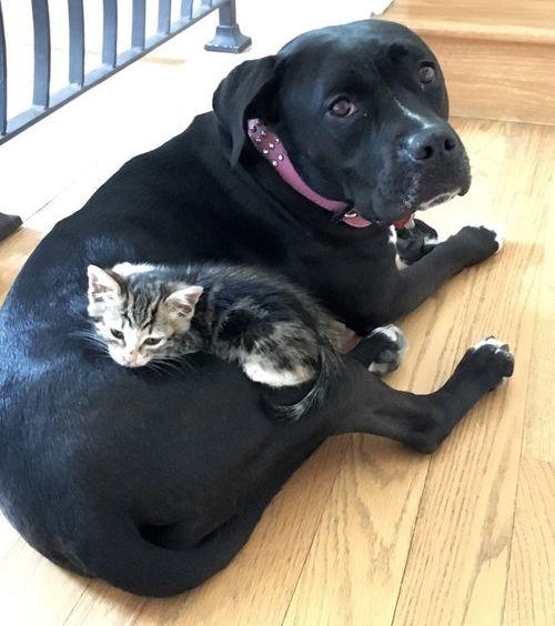 子猫を世話する犬のお母さん04
