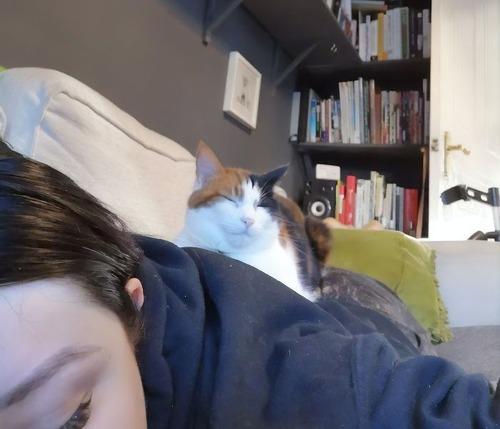 猫用のフェイクのヒザ01