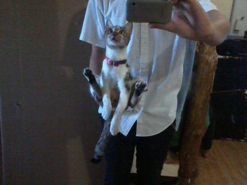 うちの猫は手の上に座るのが好き04