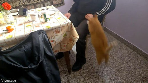 甘えてくる猫06
