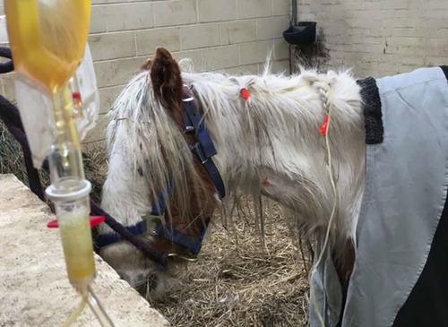 死にかけていた馬が神々しいほど美しくなる05