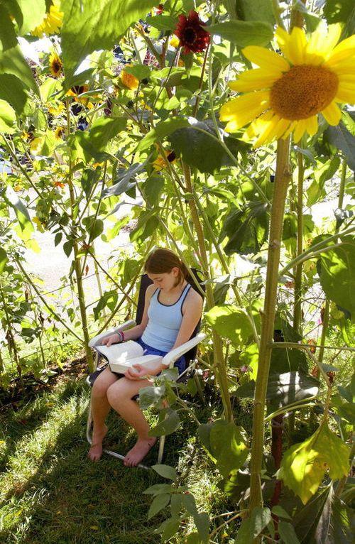 庭の格安DIY14