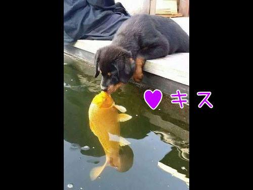 犬と魚の愛情00