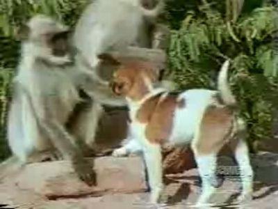 本当の犬猿の仲