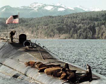 潜水艦にセイウチ03