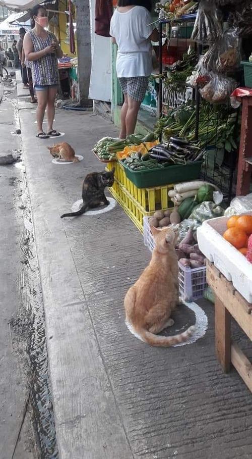 ソーシャルディスタンスに参加する猫たち01