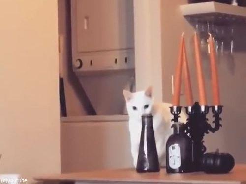 そっと動かして、そっと戻す猫(動画)04