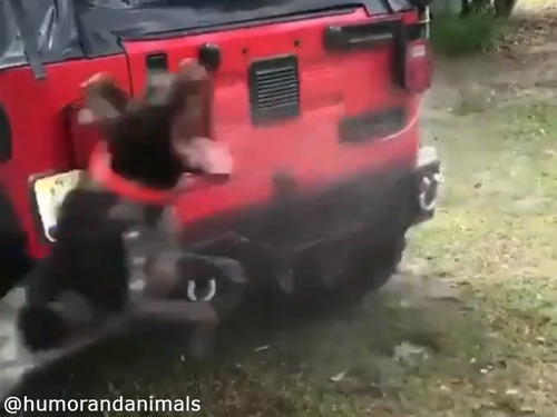 洗車を邪魔する無邪気なワンコ00
