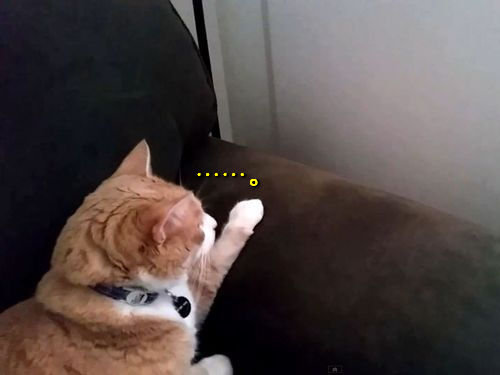 猫と猫がソファ越しに出会った01