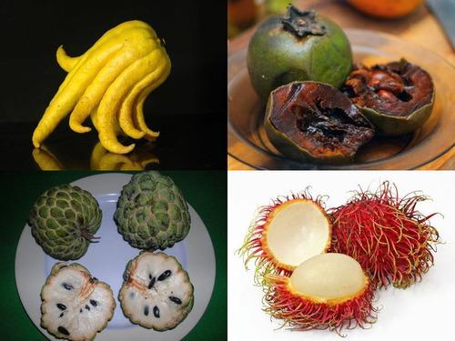 ワイルドでワンダフルな果物10選00
