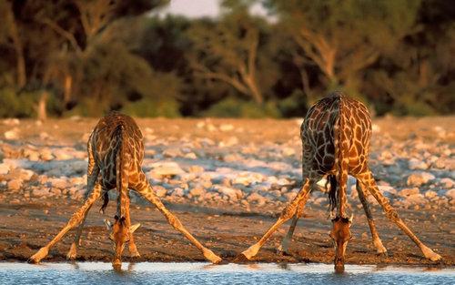 12すごいポーズをとる動物たち