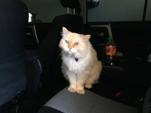 隣人の猫シンバ04