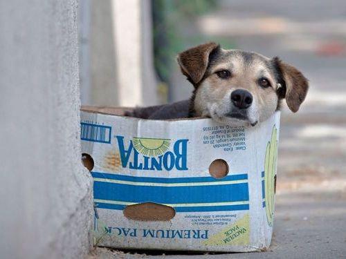 箱好きの犬07