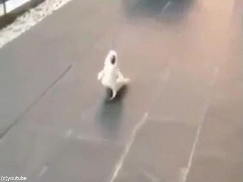 犬のように吠えるオウム01