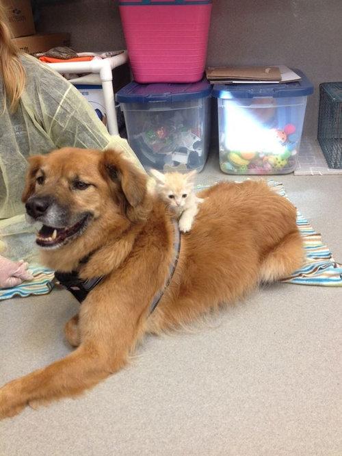 ハリケーン・カトリーナから救出された犬、猫のお母さん役となる04