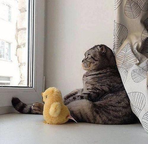 008考える、物思いにふける動物たち