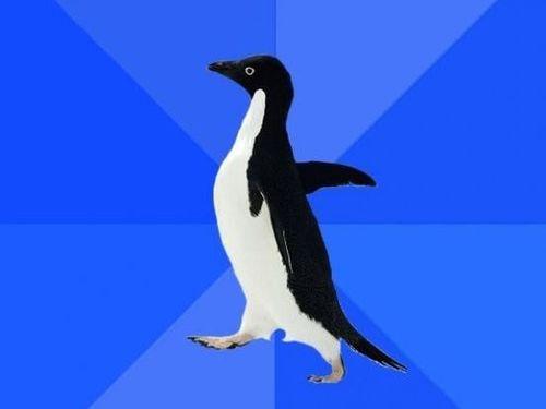 社交性のないペンギン00