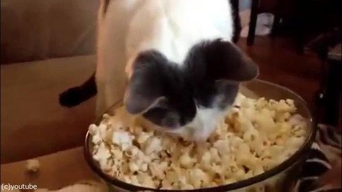 作りたてのポップコーンと猫03