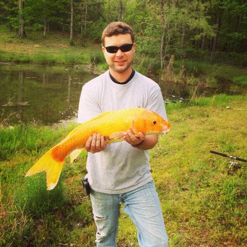 金魚が飼えなくなって人々が湖に放したその結果02