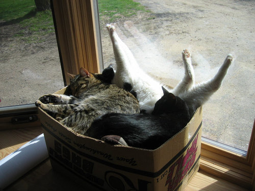 07箱や入れ物に収まる動物たち