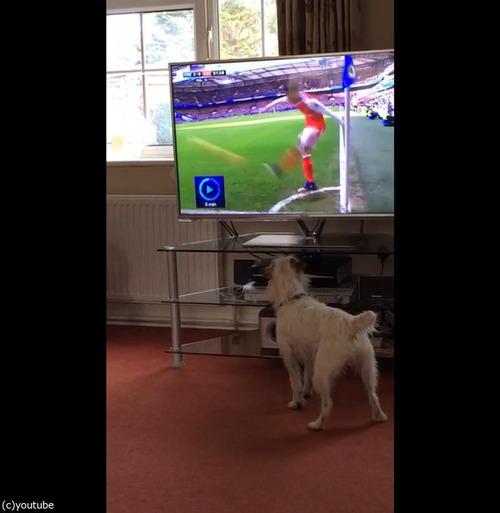 サッカーと犬03
