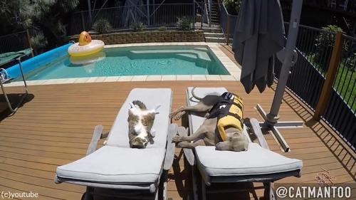 犬の背中に乗ってプール遊びをする猫08