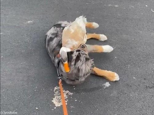 犬とアヒル03