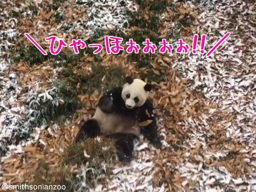 雪遊びパンダ00