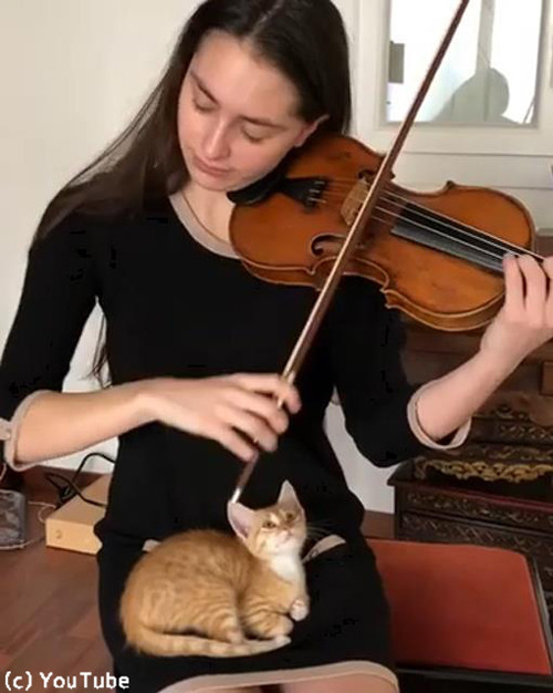 バイオリン演奏を大人しく聴く猫01