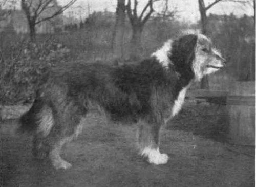 犬種は100年でこう変わった11