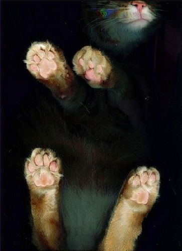 猫スキャン08
